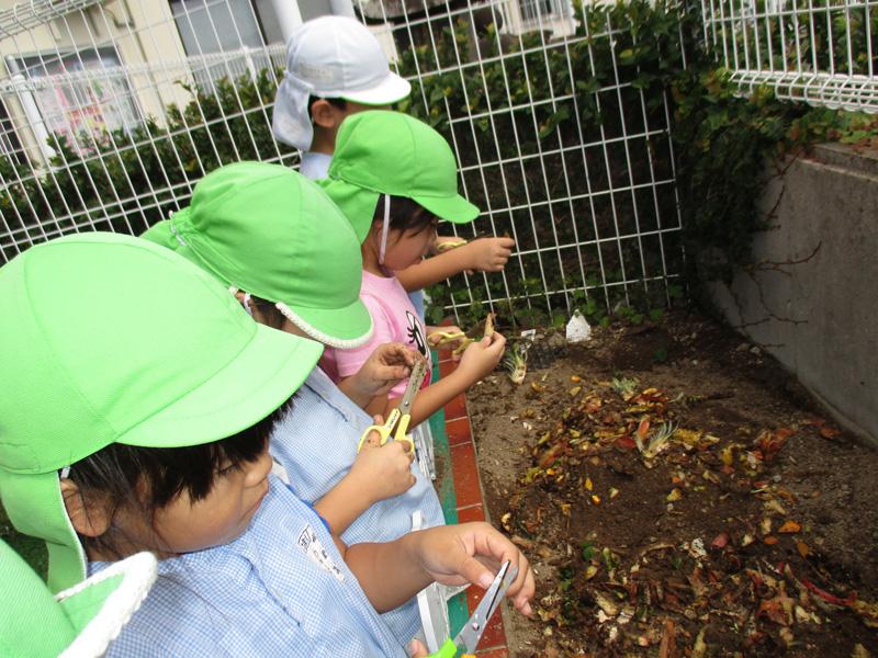 ◎菜園活動が始まりました!